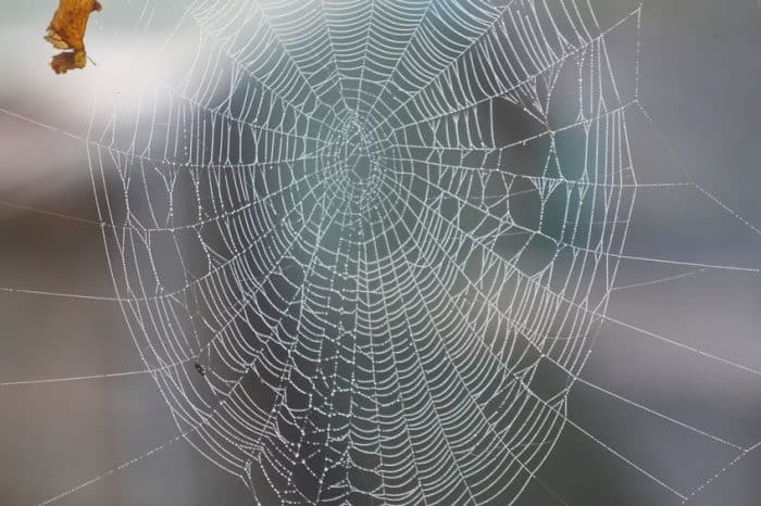 beauty of spiders